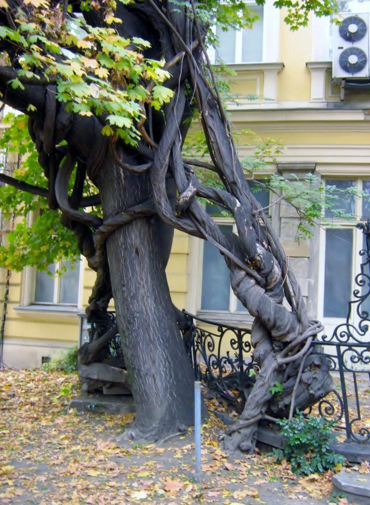 Baum mit interessanter Wurzel