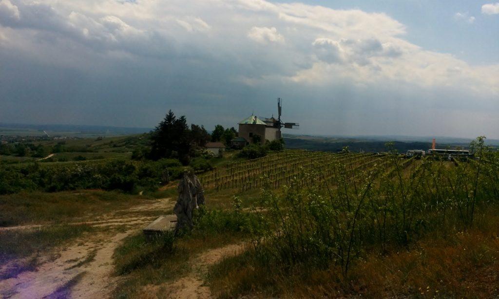 Landschaft mit Weinbergen und Windmühle in Retz