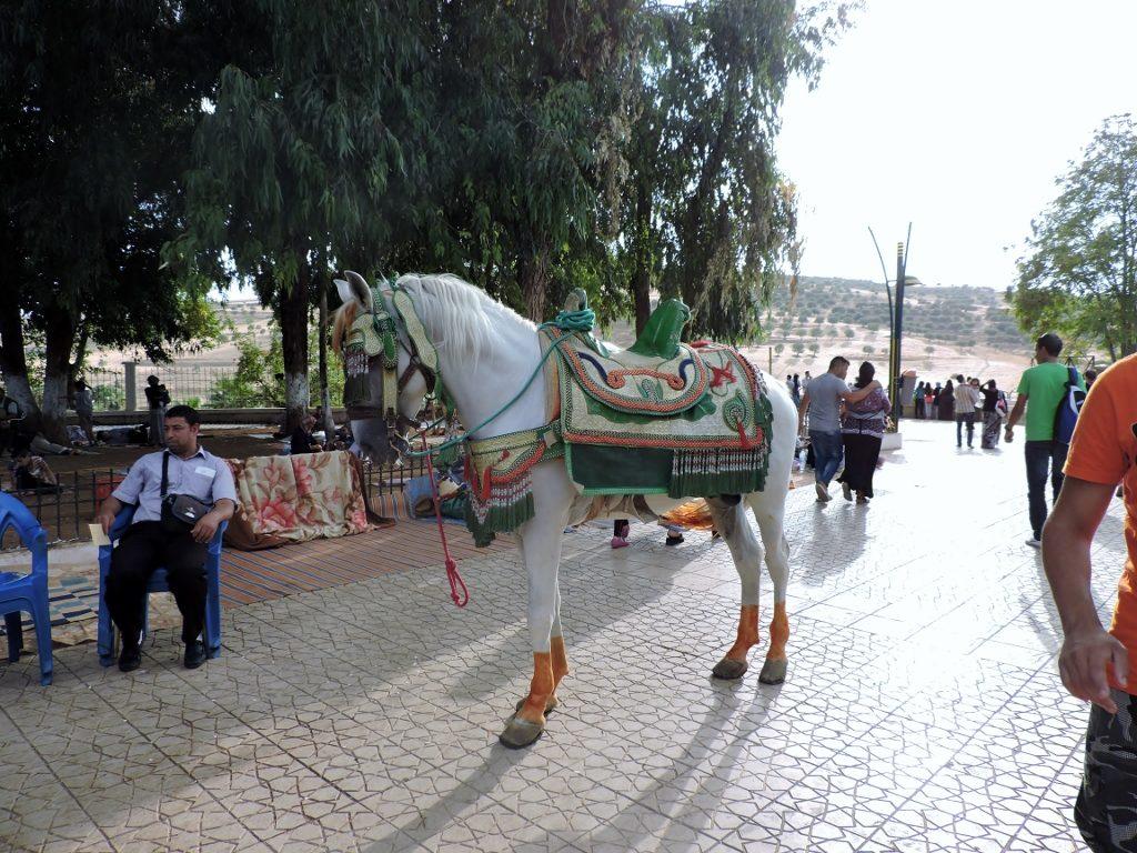 schönes geschmücktes Pferd in Marokko