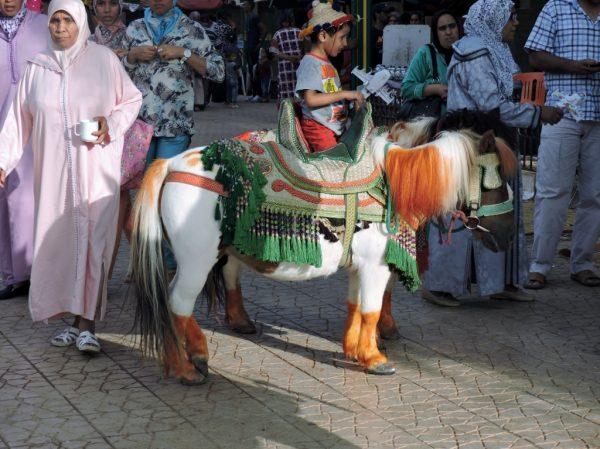geschmücktes Pferd mit Jungen