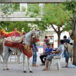 Sidi Harazem mit geschmückten Pferden