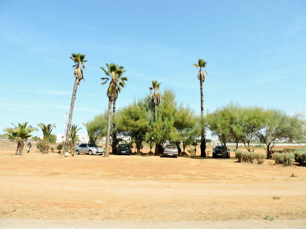 hohe Palmen unter denen Autos stehend in Marokko
