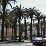 Palmen gesäumter Boulevard_Casablanca