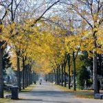 Hauptallee am_Wiener Zentralfriedhof