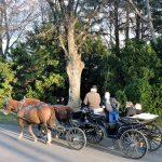 Kutschenfahrt durch_Wiener Zentralfriedhof