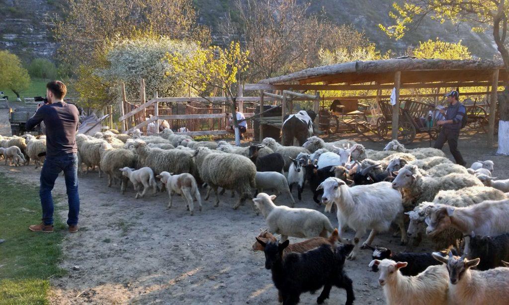 Entschleunigung im Ökodorf in Moldawien