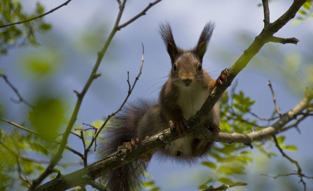 Eichhörnchen im Baum_Reisen