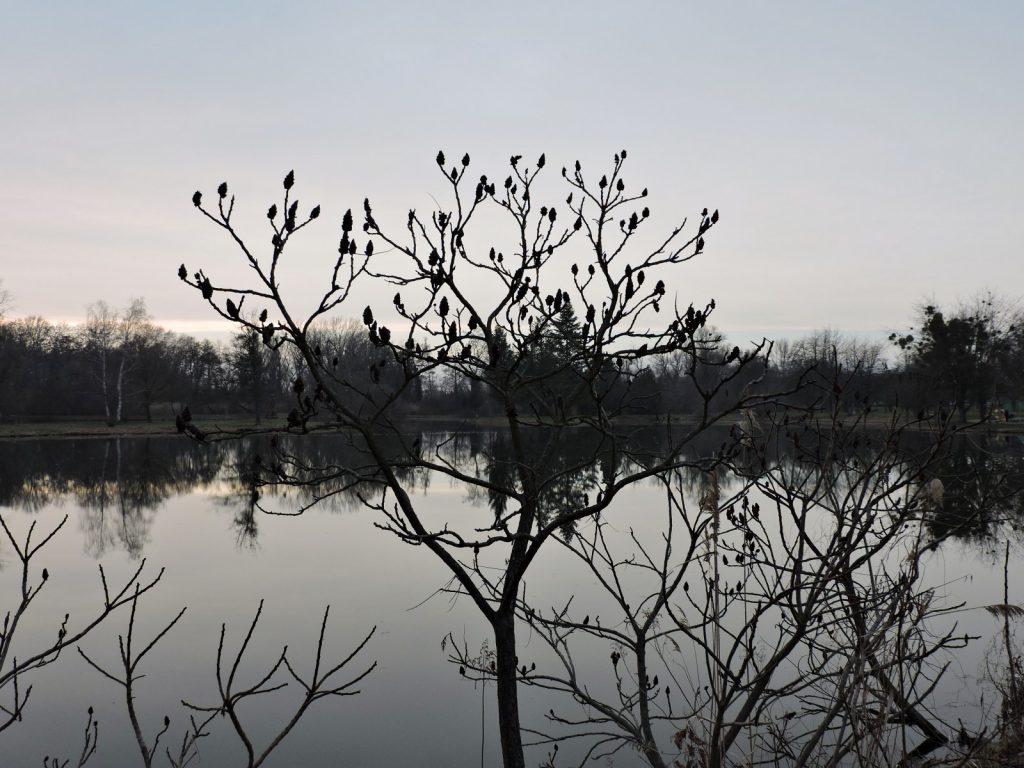 Teich-Landschaften in Sarvar_Wellbeing