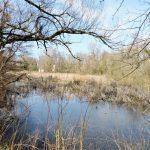 Teich-Landschaften in Sarvar, Ungarn