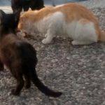 Katzen_Türkei