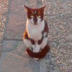 Straßenkatze_Türkei