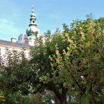 Blick auf St. Peter Kirche Salzburg