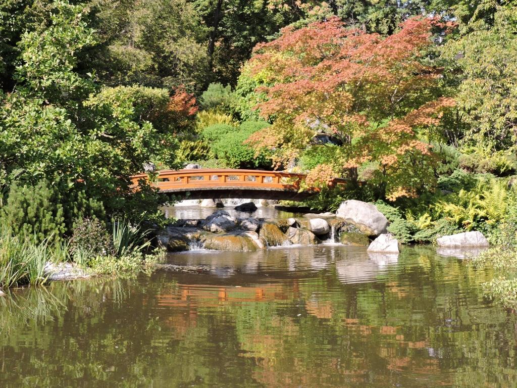 Japanische Brücke im Setagaya-Park - Japanischer Garten in Wien