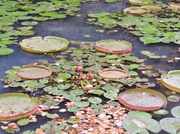 Pflanzen auf dem Teich