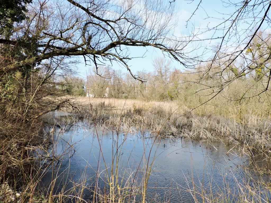 Teich in_Sarvar