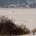 Winter Segeln am Wallersee_SalzburgerLand