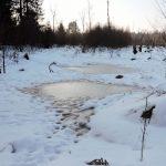 winterliches Wenger Moor am Wallersee