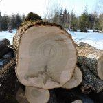 Jahresringe eines gefällten Baumes_SalzburgerLand
