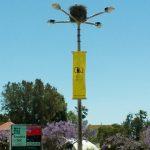 Storchennest auf Straßenlaterne