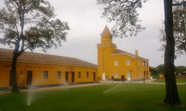 gelbe Kirche mit Wiese davor