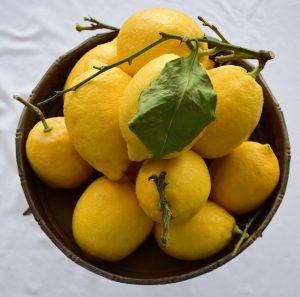 Zitronen in Schale für Salzzitronen marokkanische Art