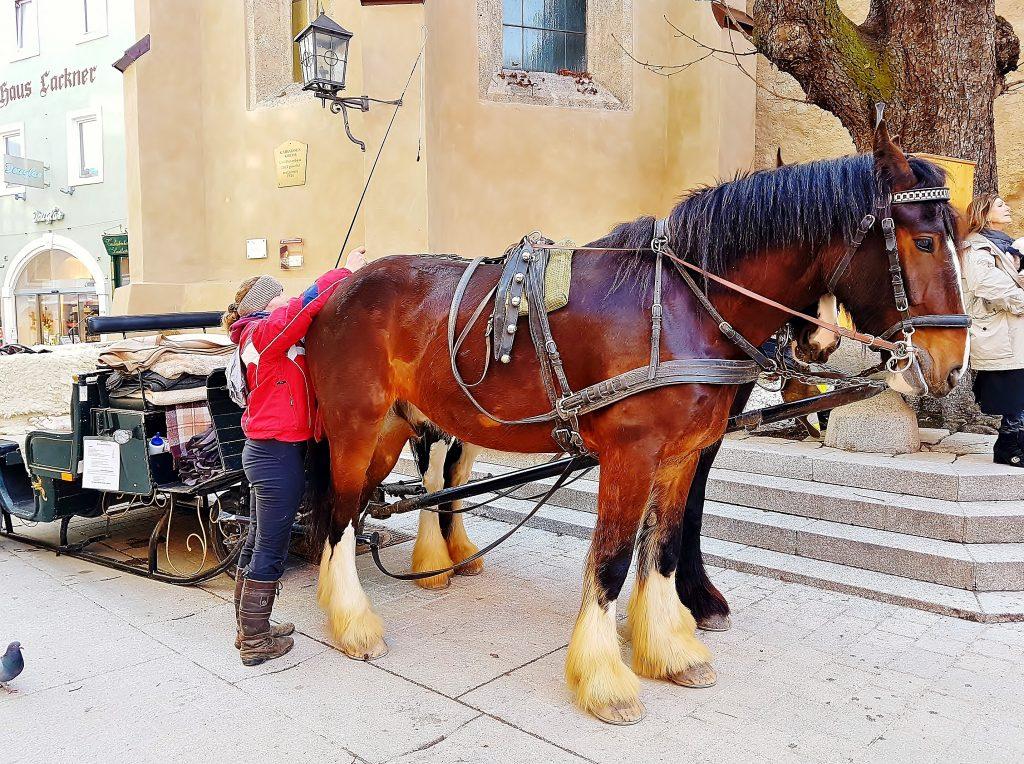 Pferdekutsche mit Kutscherin in Kitzbühel Altstadt