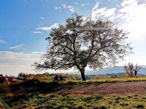 Landschaft als Wien Ausflugsziele kostenlos
