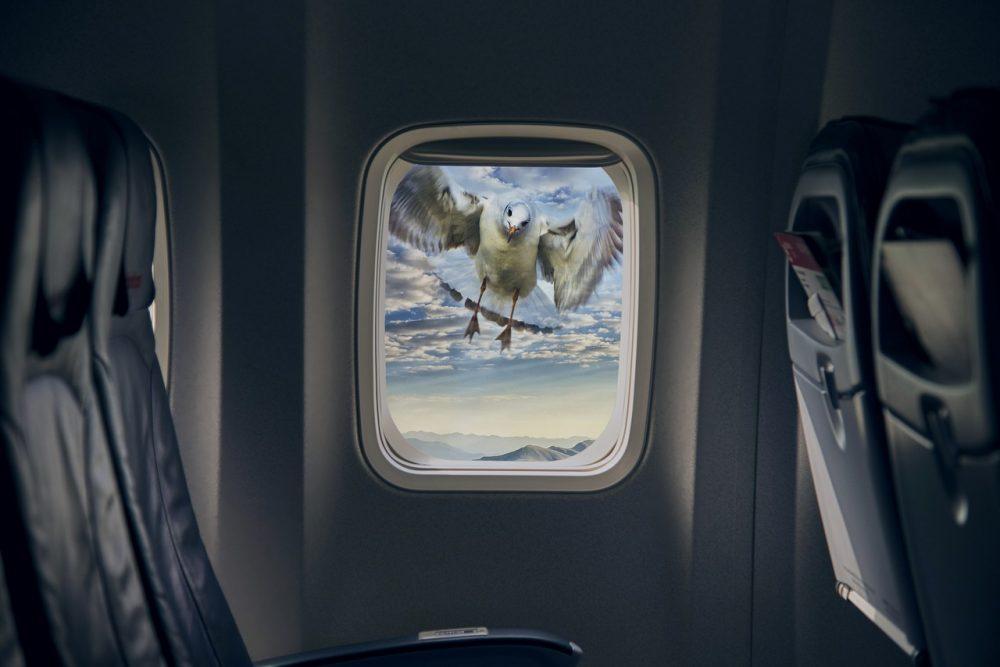 bequemes Fliegen, Fenster