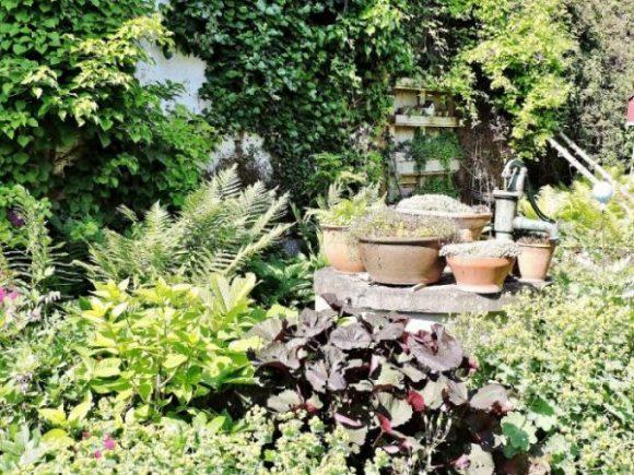 grüner Garten mit Keramiktöpfen