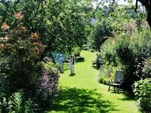 grüner Garten mit Obstbäumen