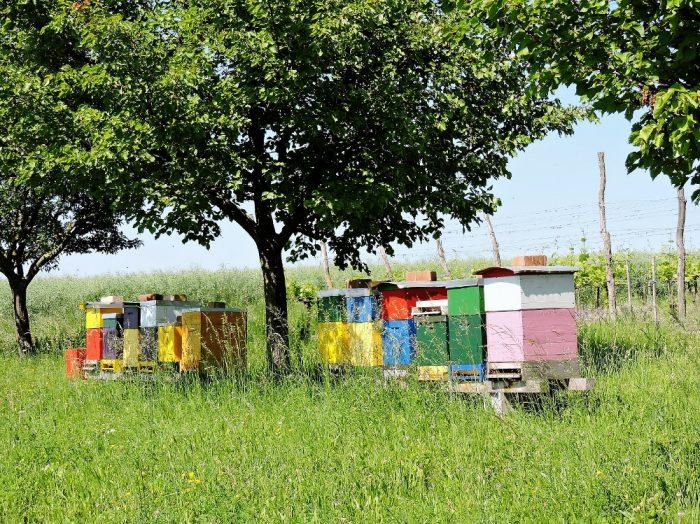 bunte Bienenkästen unter Baum
