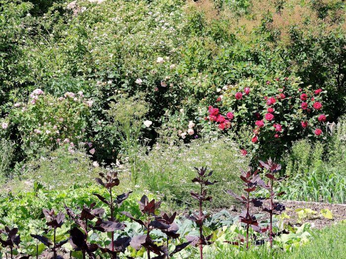 Garten im Museumsdorf Niedersulz