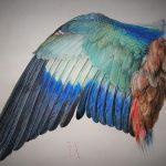 Bild von Albrecht Dürer zeigt den blauen Flügel einer Feldracke