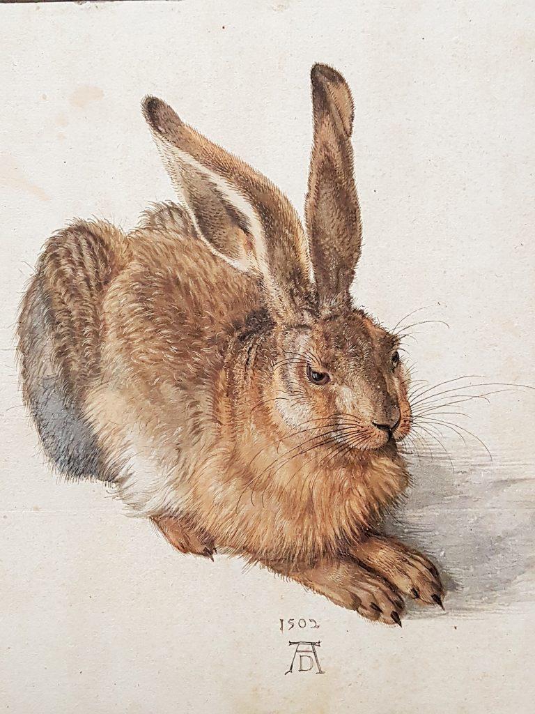 Feldhase, Bild von Albrecht Dürer