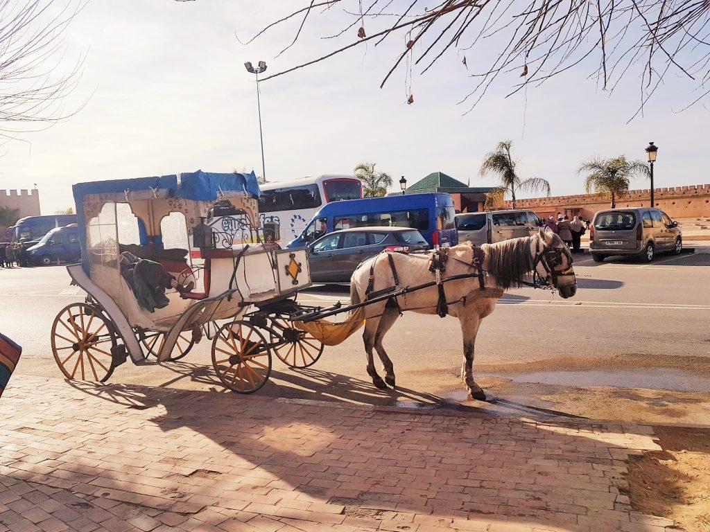 Pferdekutsche in Meknes Marokko