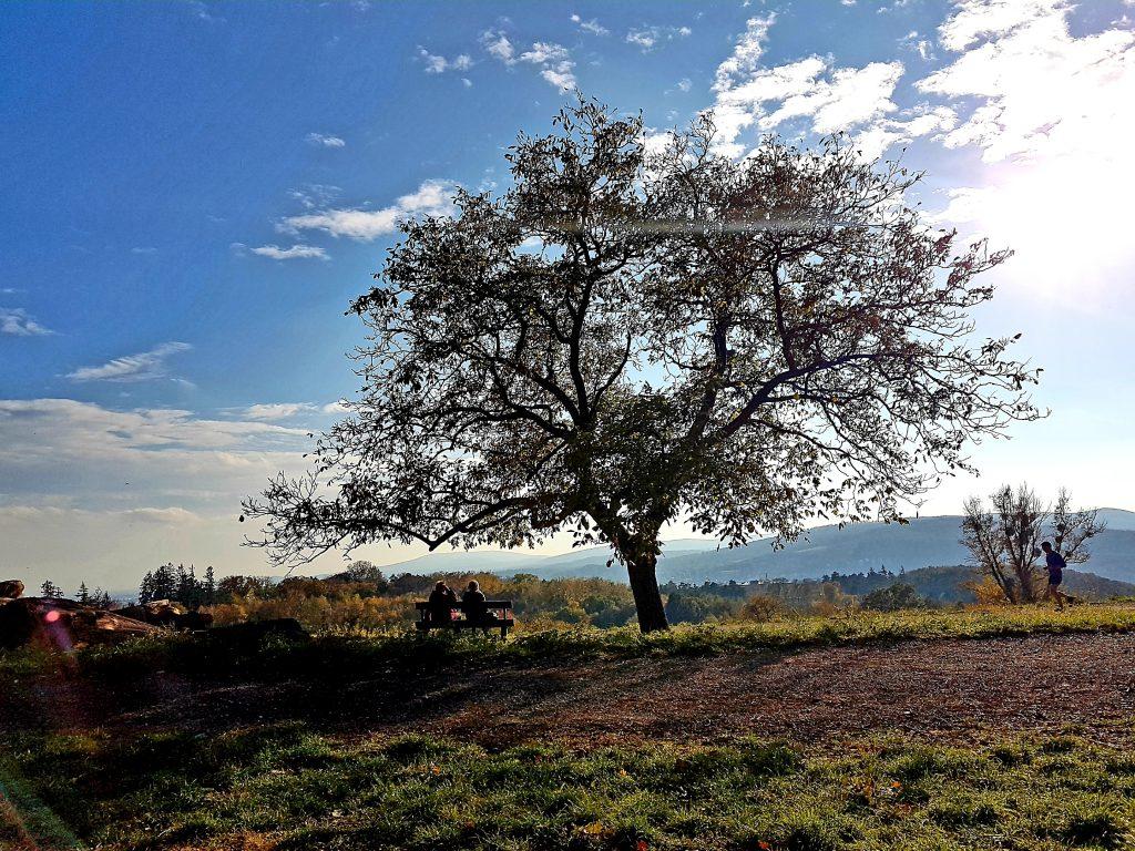 großer Baum in Landschaft