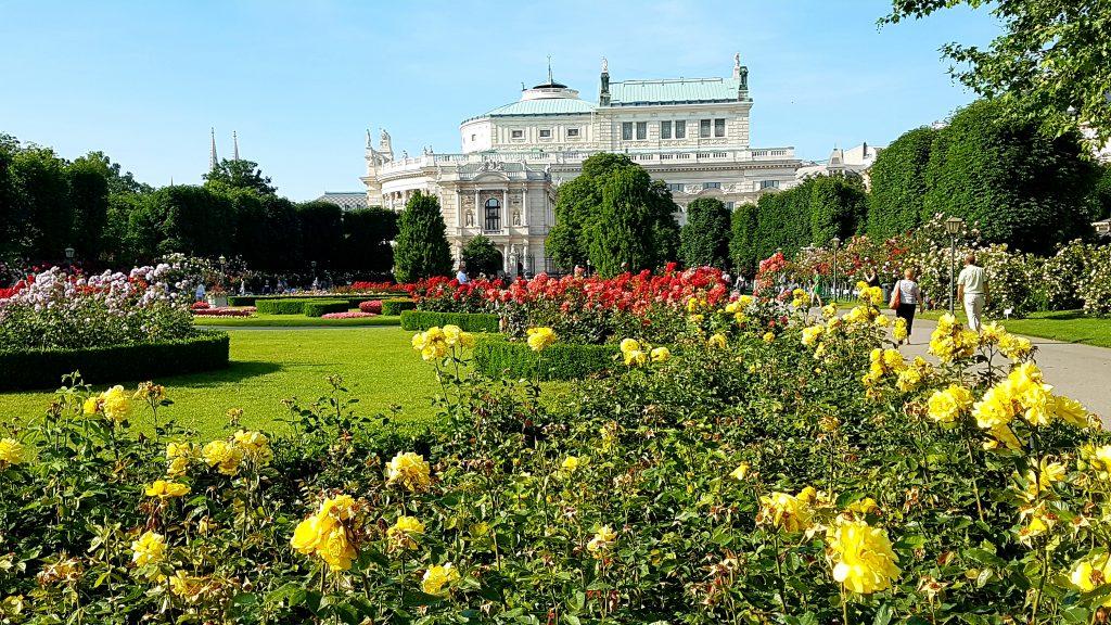 Rosenpracht mit Burgtheater Wien im Hintergrund