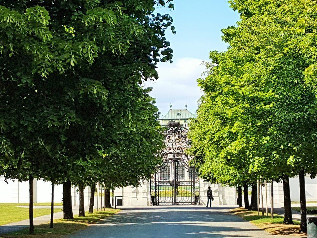 Baum-Allee Belvedere Wien
