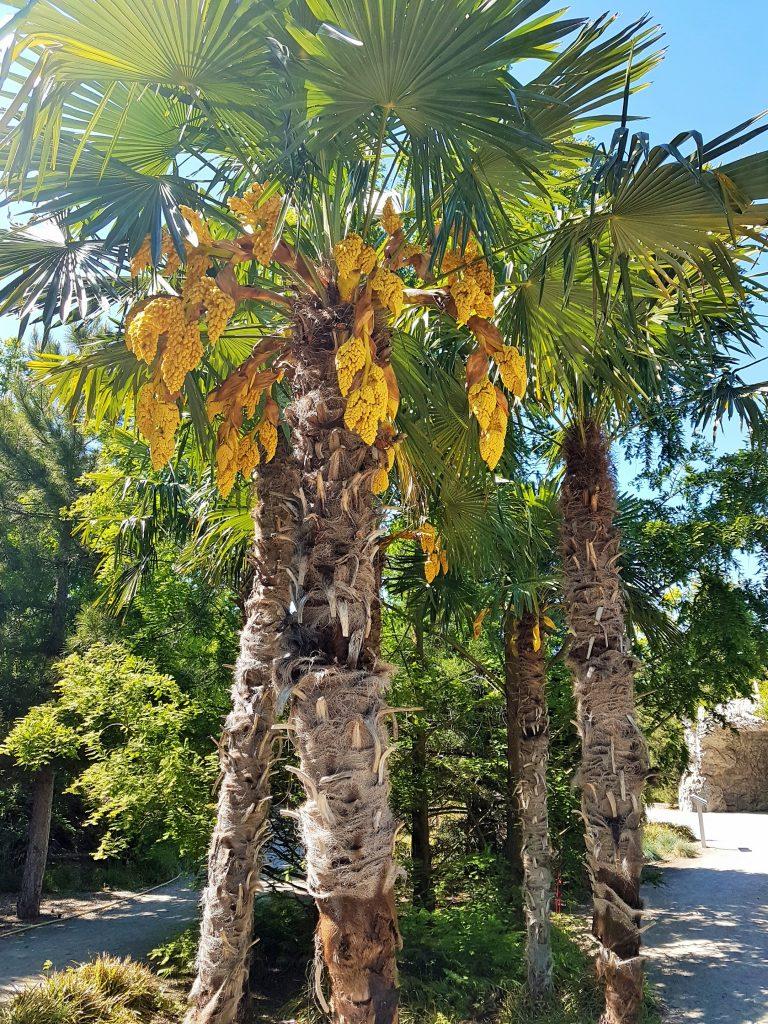 Palmen in den Blumengärten Hirschstetten