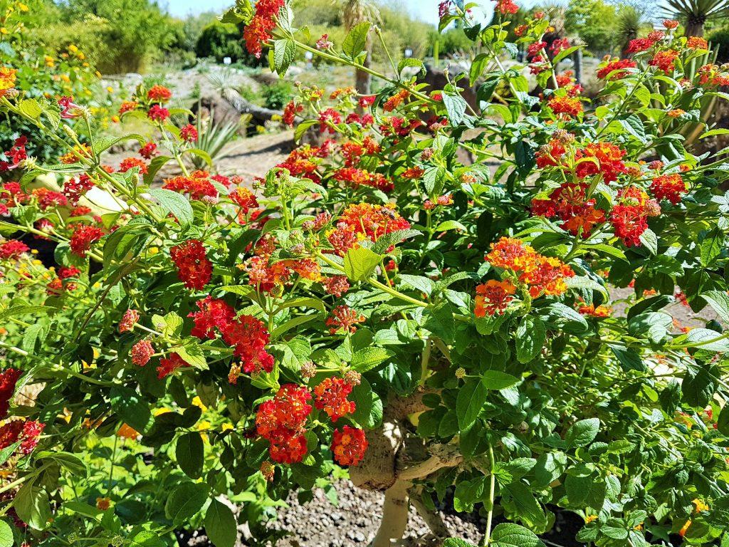 Hirsstetten Blumengärten