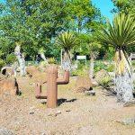 Blumengärten Hirschstetten mit Kakteen