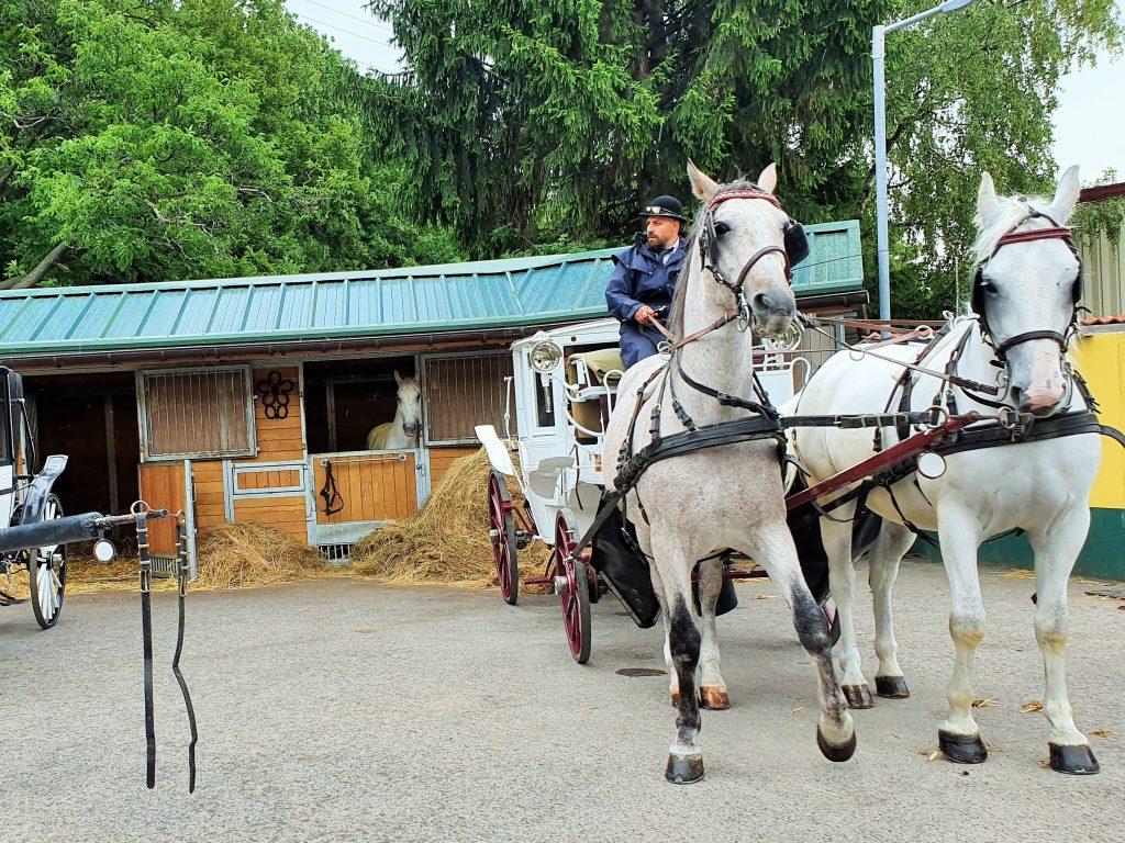 Ausflug zu den Fiaker Pferden in Wien-Simmering