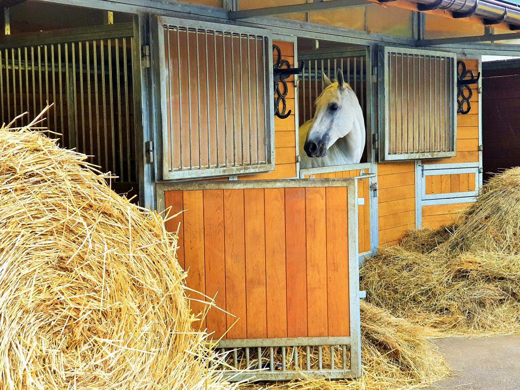 Ausflug zu Fiaker Pferde in Wien-Simmering
