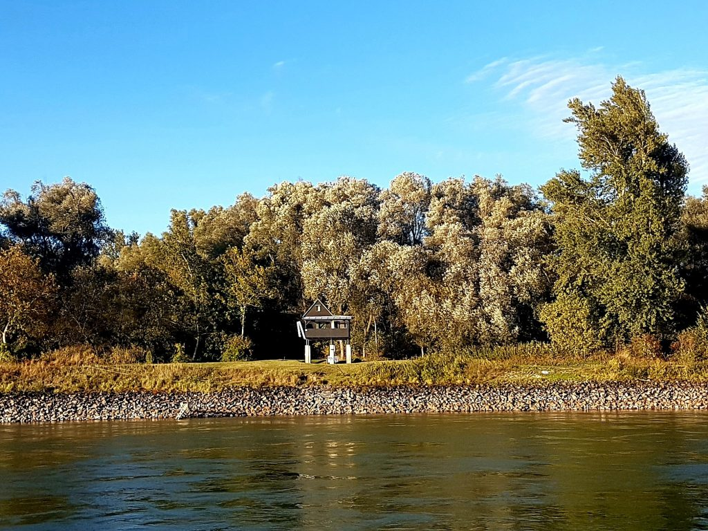 Donauauen am Flussufer