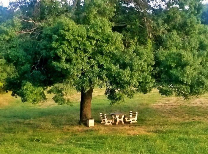 Baum in grüner Landschaft mit Sitzgruppe
