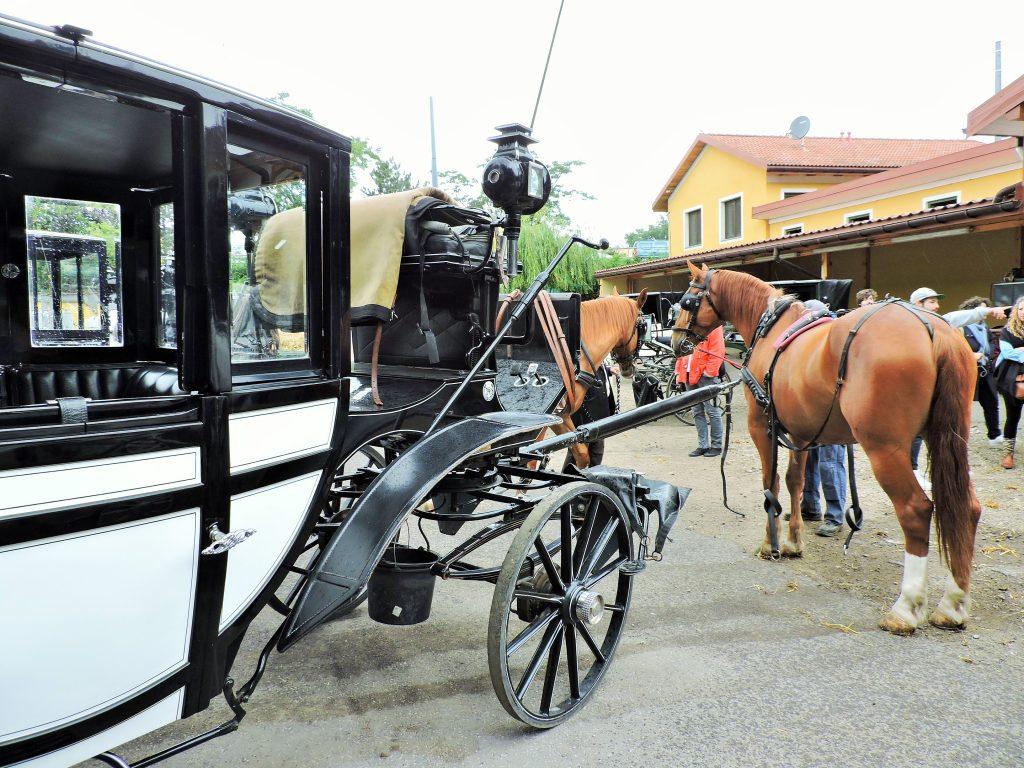 Ausflug zu Fiaker Pferden in Wien Simmering