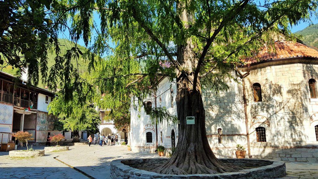 alter Baum im Innenhof von Batschkovo Kloster Bulgarien