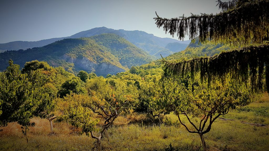 grünen Hänge des Rhodopen Gebirges in Bulgarien