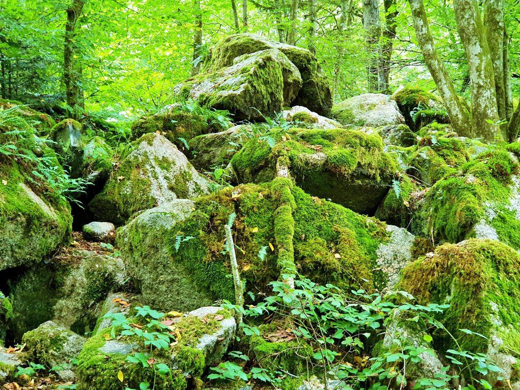 Felsformationen im Urwald Pesenbachtal Mühlviertel
