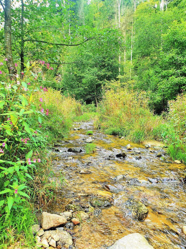 Wildbach mit Steinen in grüner Natur